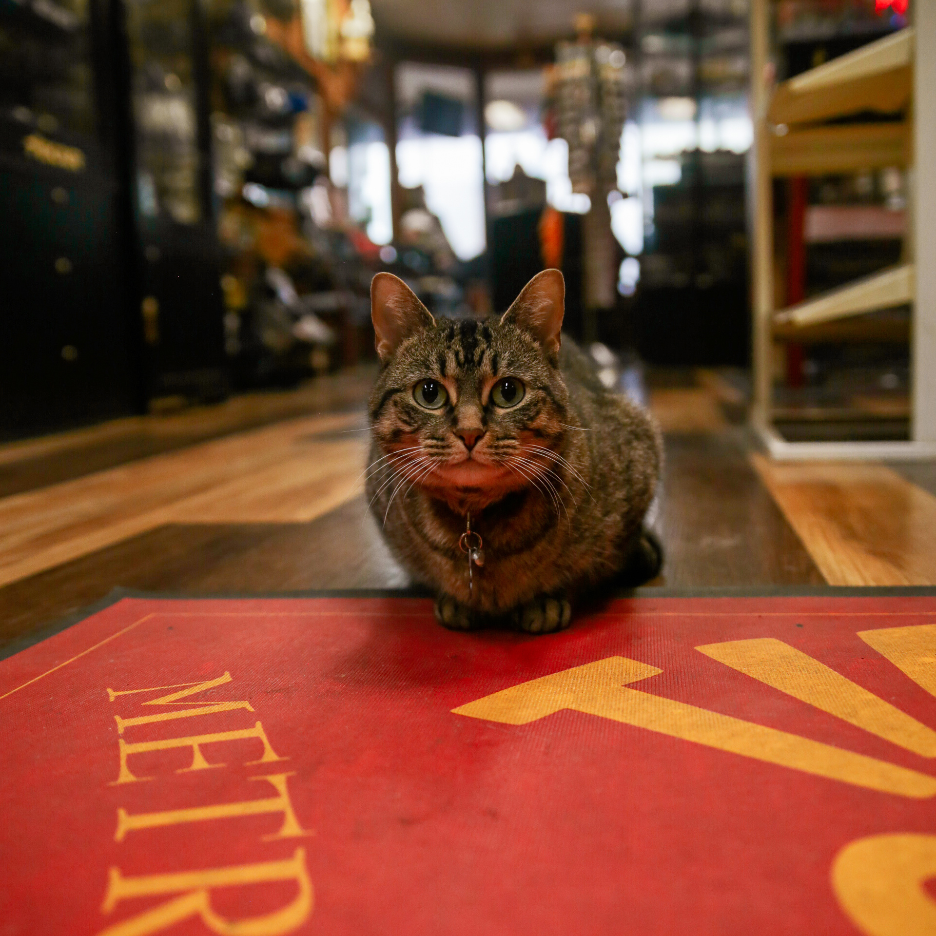 Minerva, the Shop Cat