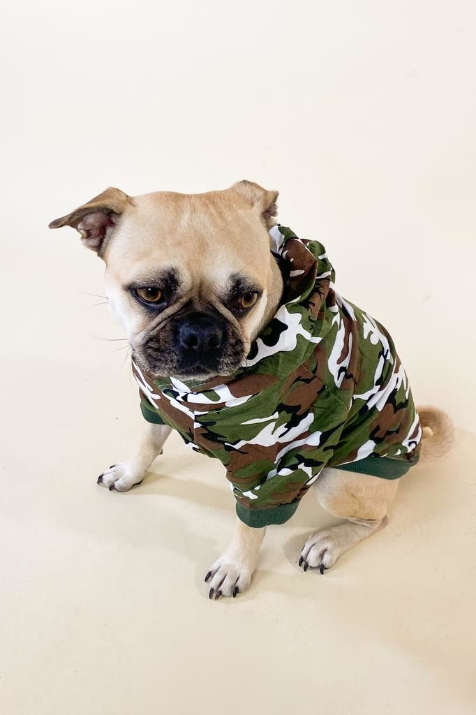 Accessories Camo Dog Hoodie