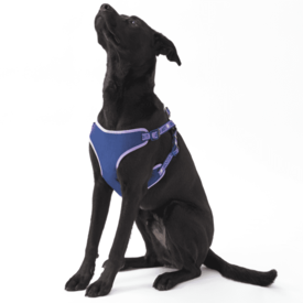 Dog Harness, Moonstone Purple