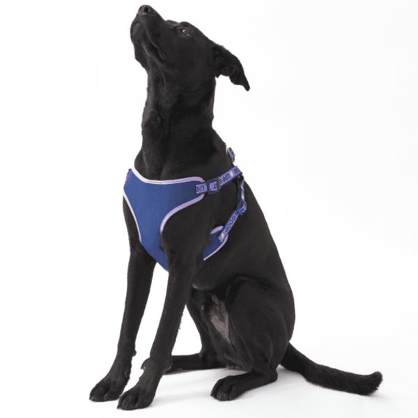 Life is Good Dog Harness, Moonstone Purple
