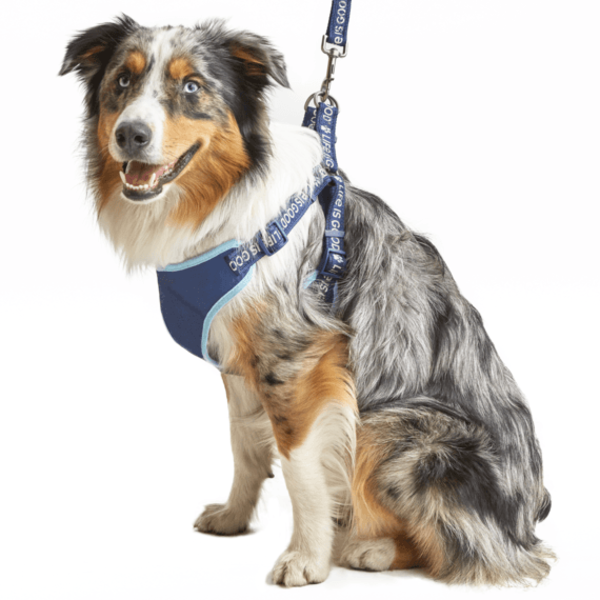 Life is Good Dog Harness, Beach Blue