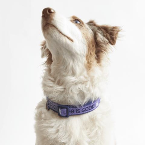 Daisy Dog Collar