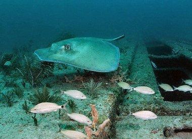 Sea Emperor Wreck