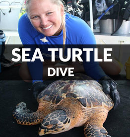 Force-E Scuba Centers Sea Turtle Dive