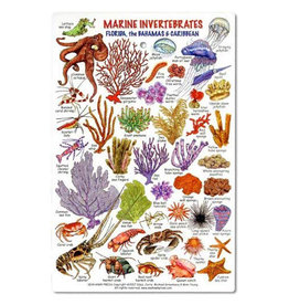 Marine Sports Mfg. Marine Sports ID Invertebrates & Coral Card