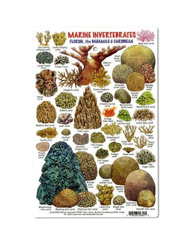 Marine Sports Mfg. Marine Sports ID Invertebrates & Coral Card
