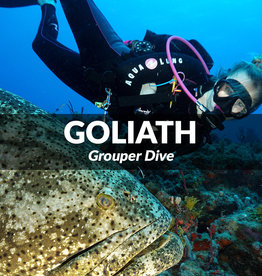 Force-E Scuba Centers Dive with the Goliaths- Palm Beach