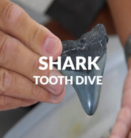 Force-E Scuba Centers Shark Tooth Dive