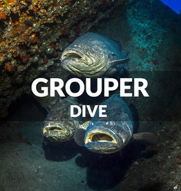 Force-E Scuba Centers Dive with the Goliaths- Jupiter