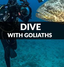 Force-E Scuba Centers Dive with the Goliaths- Boynton Beach
