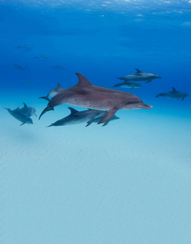 Bimini - One Day Dolphin Adventure