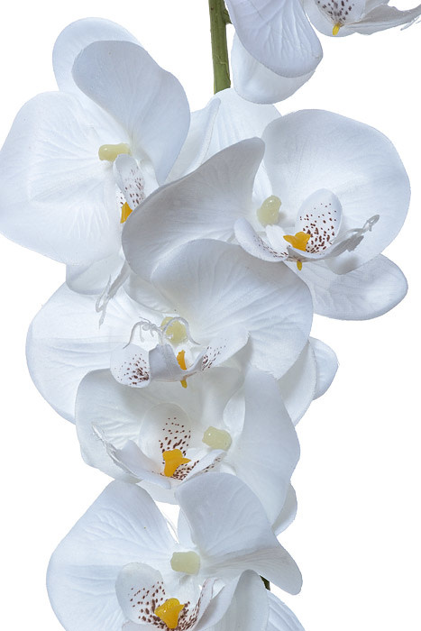 Orchid Garlands