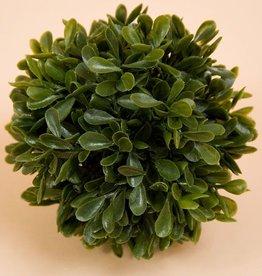 "Small Boxwood Green Ball 6"""