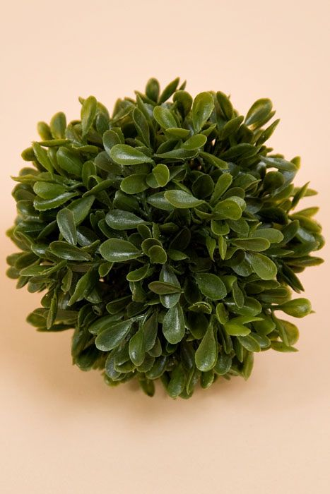 Small Boxwood Green Ball 6""