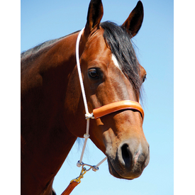 Martin Leather Noseband Headsetter
