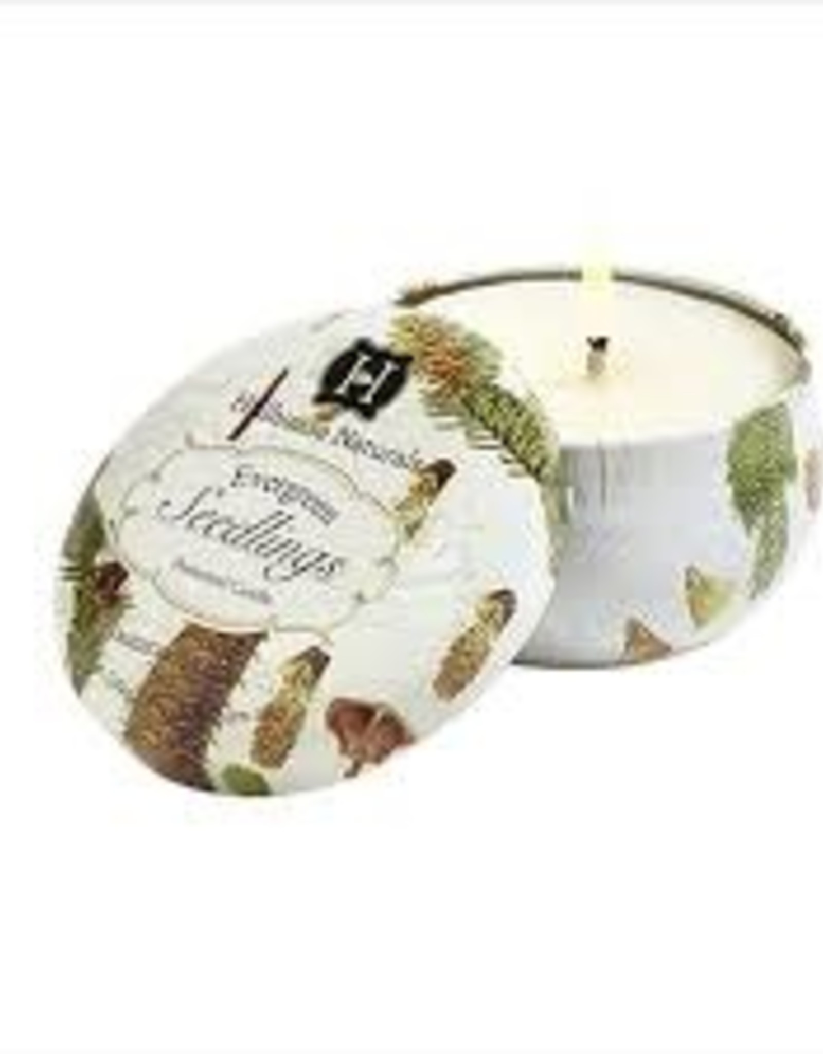 Hillhouse Naturals Evergreen Seedlings candle Tin