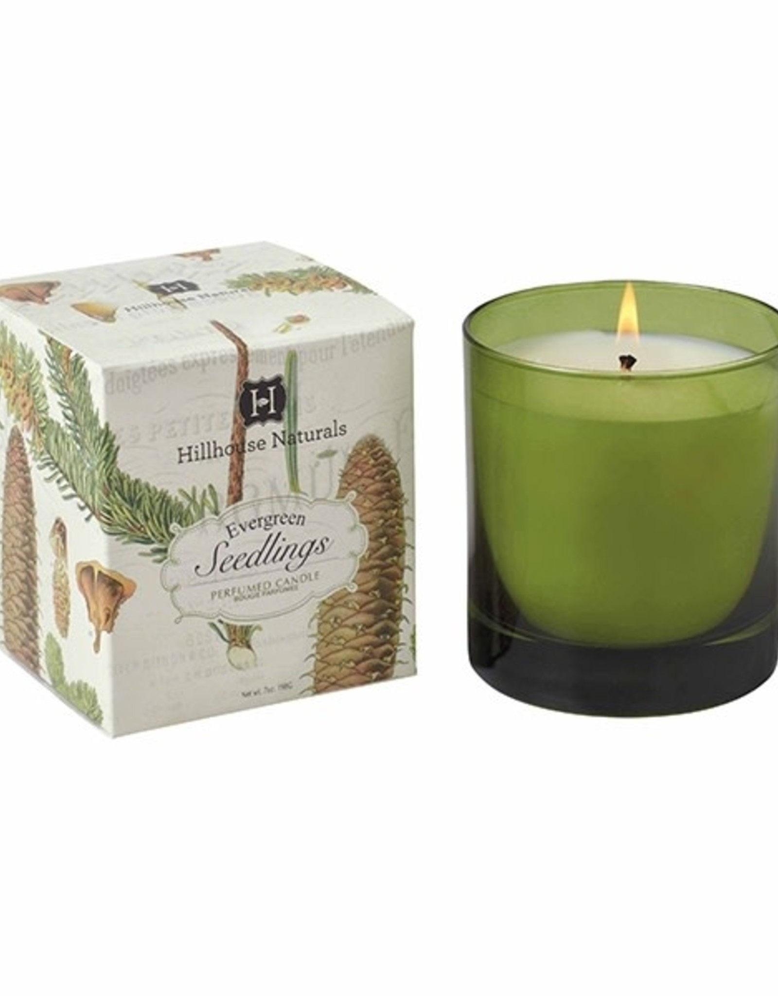 Hillhouse Naturals Evergreen Seedlings Candle Glass  Silver Lid 7oz