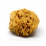 "Artisan Enhancements Artisan Enhancements Sea Wool Sponge, 5""-6"""