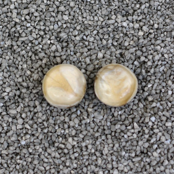 Jewelry Denaive:  Agnes Spruce Cream Pierced