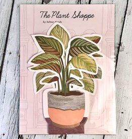 Paper Pinstripe Plant