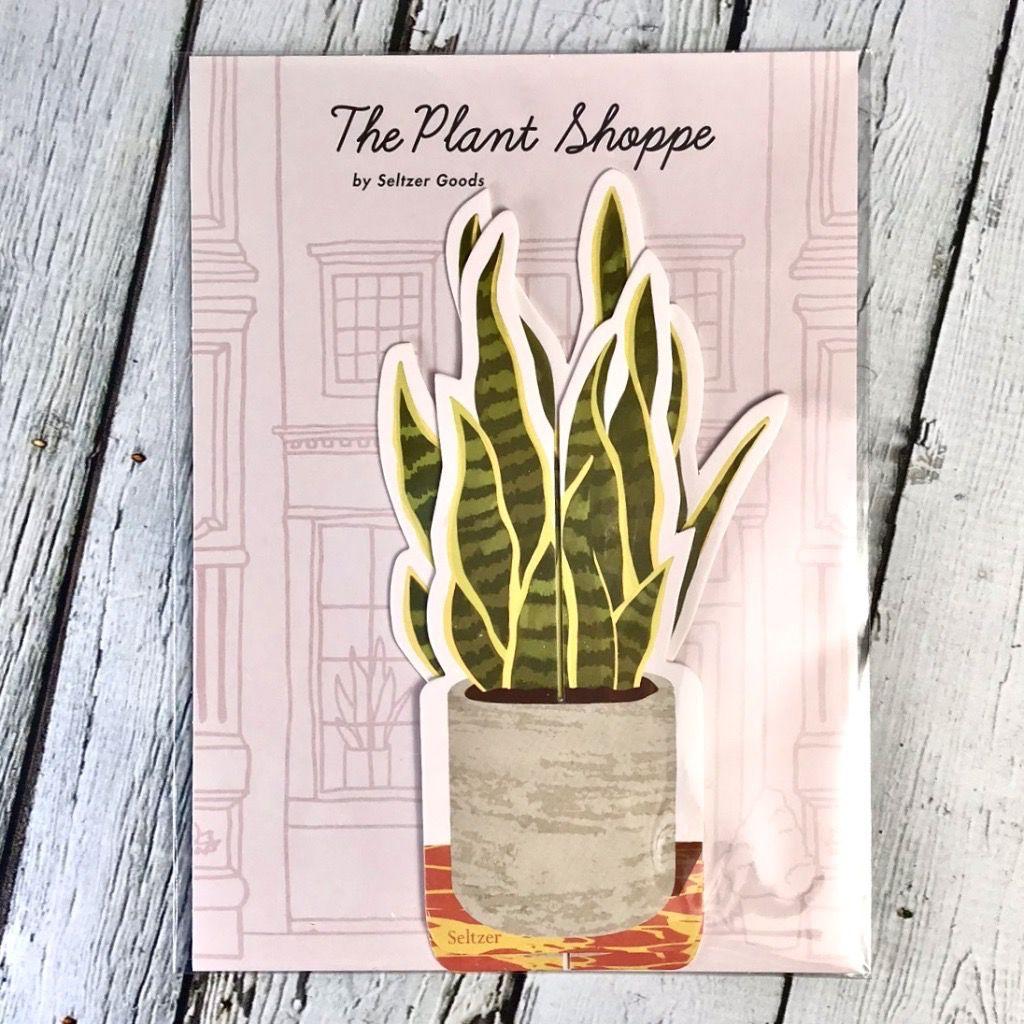 Paper Snake Plant