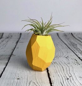Pineapple Geo Magnetic Air Plant Holder