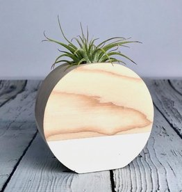 White Circle Air Plant Holder