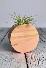 Coral Circle Magnetic Air Plant Holder