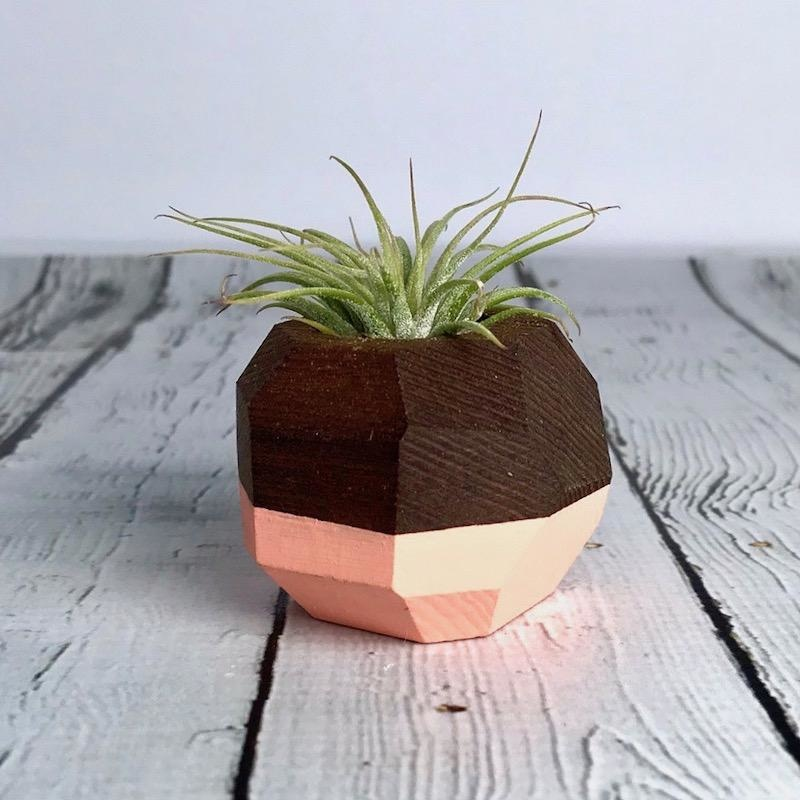 Coral Geo Air Plant Holder