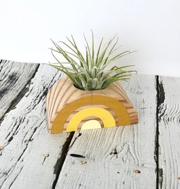 Shades of Yellow Rainbow Air Plant Holder