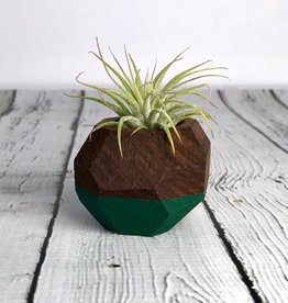 Forest Green Geo Air Plant Holder
