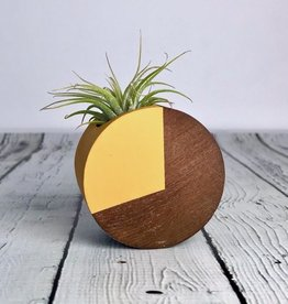 Mustard Circle Air Plant Magnet