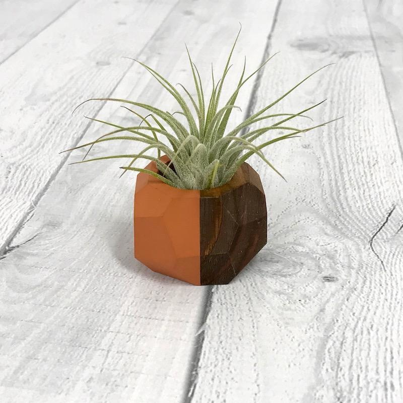 Terra Cottta Geo Air Plant Holder