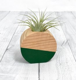 Forest Green Circle Air Plant Holder