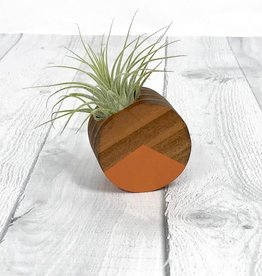 Terra Cotta Circle Air Plant Magnet