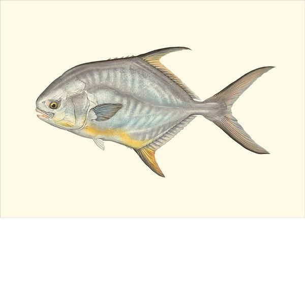 Saltwater Gamefish Card Set by Flick Ford