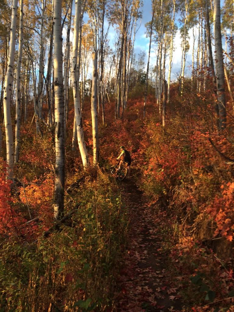 Trail Review: WOW Trail