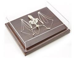 Just Sculpt Real Bat Skeleton