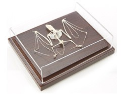 Real Bat Skeleton