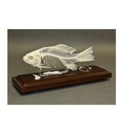 Just Sculpt Real Fish Skeleton