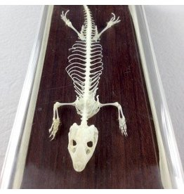 Just Sculpt Real Lizard Skeleton
