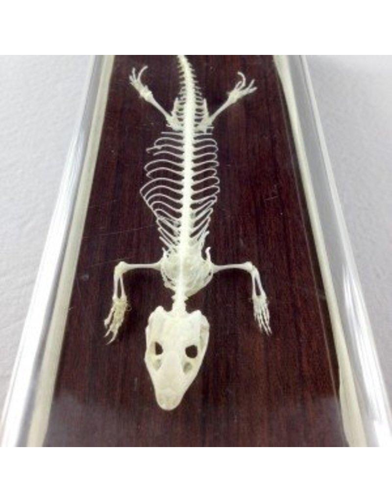 Just Sculpt Real Lizard Skeleton