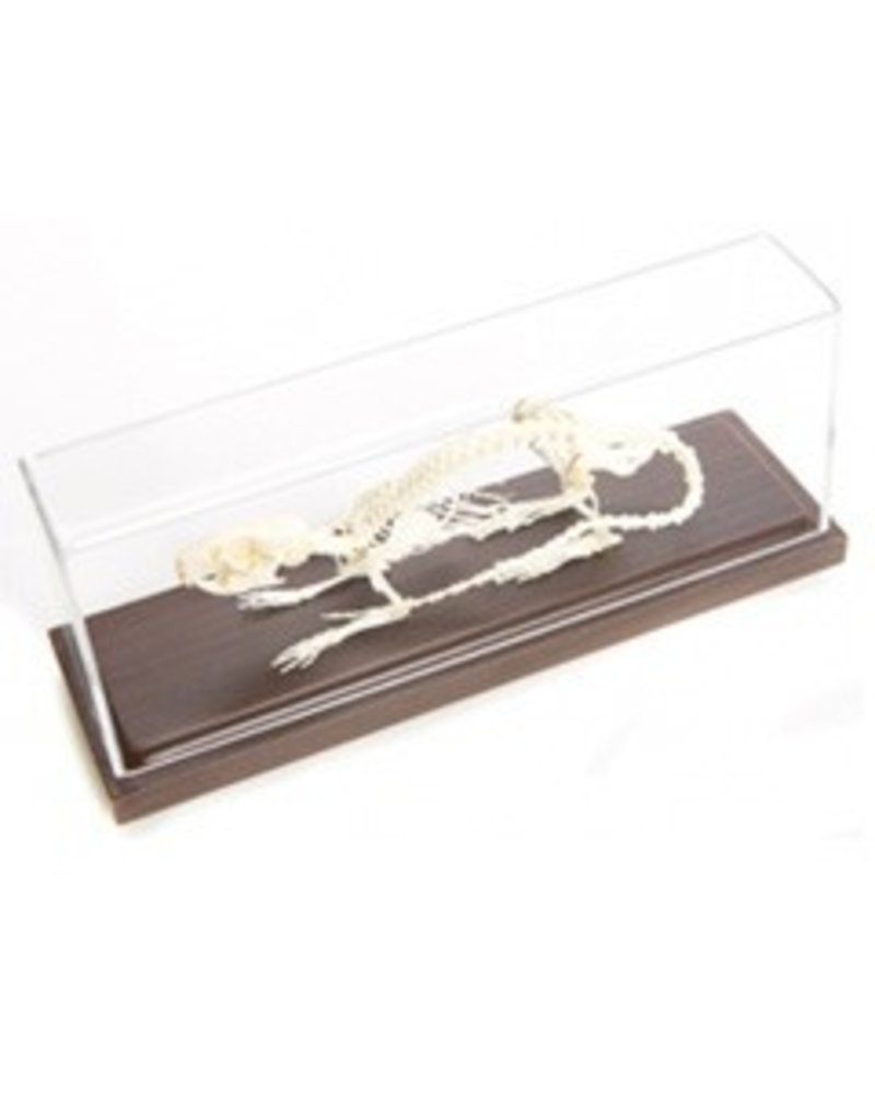 Just Sculpt Real Rat Skeleton