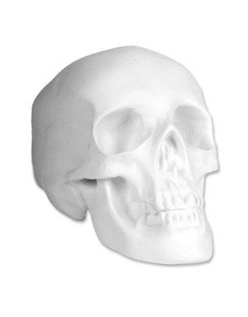 Sculpture House Plaster Skull (Human)