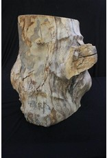 Wood Maple Burl 12x16x17 #30003