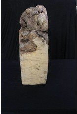 Wood Spalted Mable Burl 18x20x7 #30016