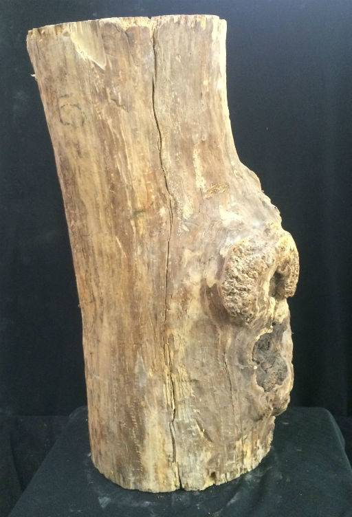 Wood Spalted Maple Burl 19x8x7 #061003