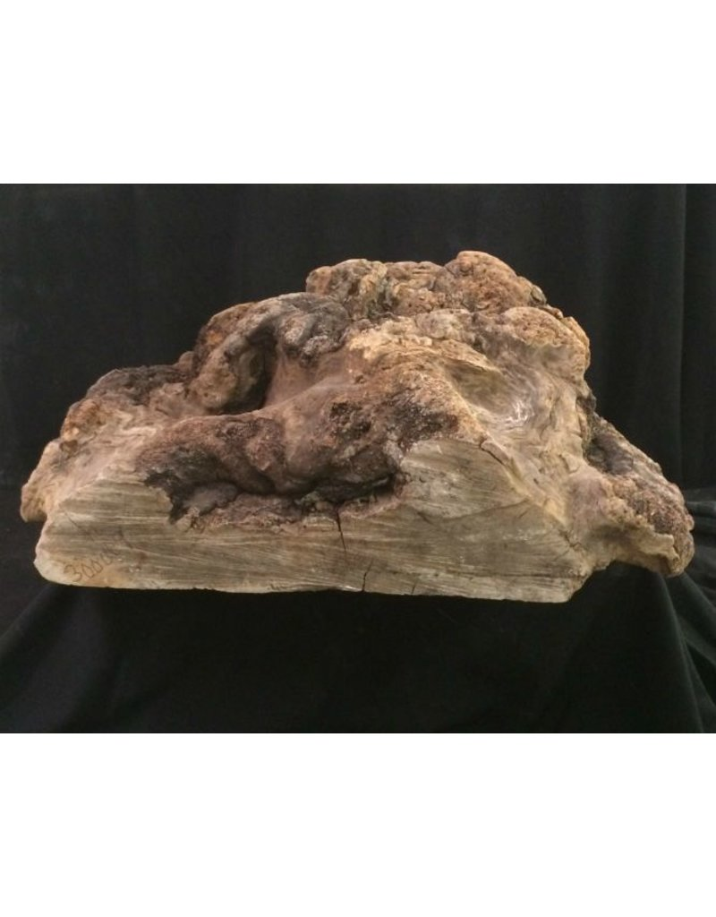 Wood Cherry Burl 18X19X8 #051003