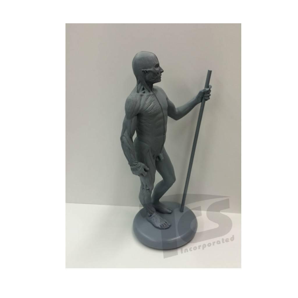 "Just Sculpt 12"" resin ecorche man"