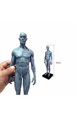Just Sculpt Ecorche Male Figure 12in